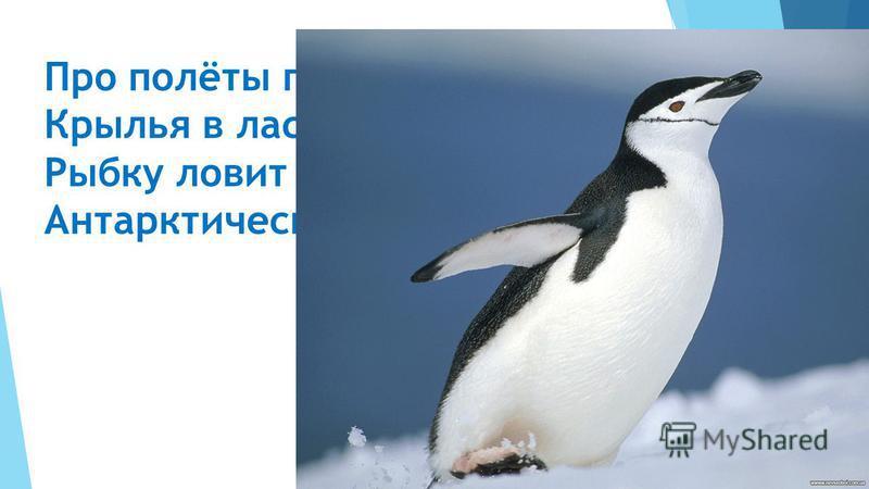 Про полёты позабыл, Крылья в ласты превратил, Рыбку ловит среди льдин Антарктический …