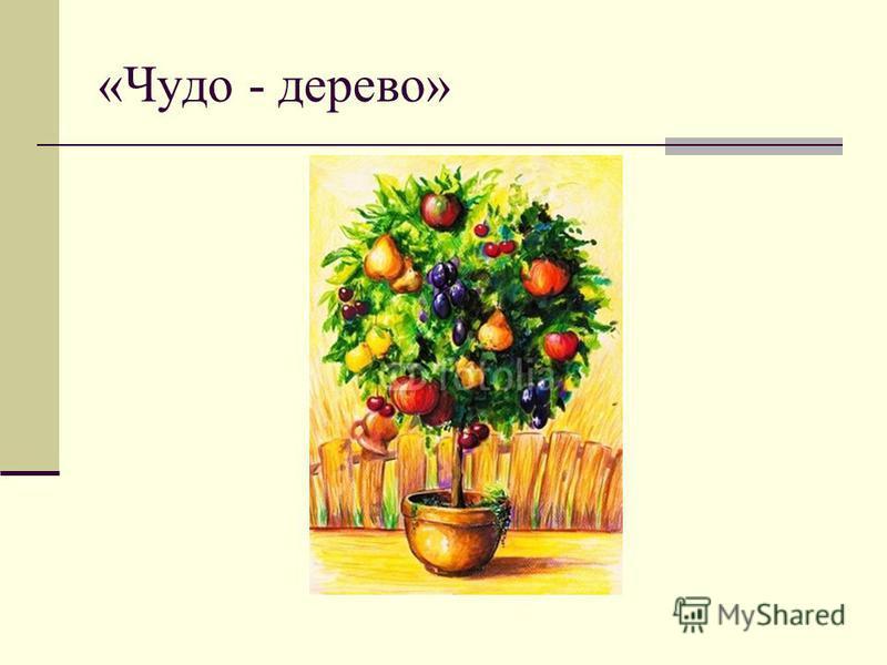 «Чудо - дерево»