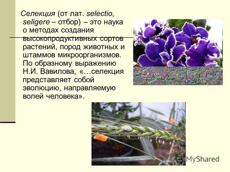 Селекция (от лат. selectio, seligere – отбор) – это наука о методах создания высокопродуктивных сортов растений, пород животных и штаммов микроорганизмов. По образному выражению Н.И. Вавилова, «…селекция представляет собой эволюцию, направляемую воле