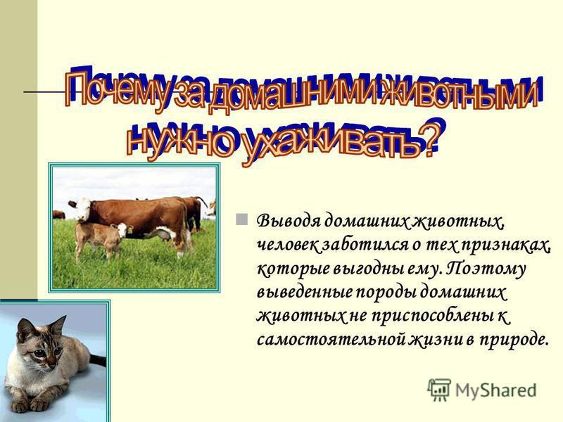 Выводя домашних животных, человек заботился о тех признаках, которые выгодны ему. Поэтому выведенные породы домашних животных не приспособлены к самостоятельной жизни в природе.