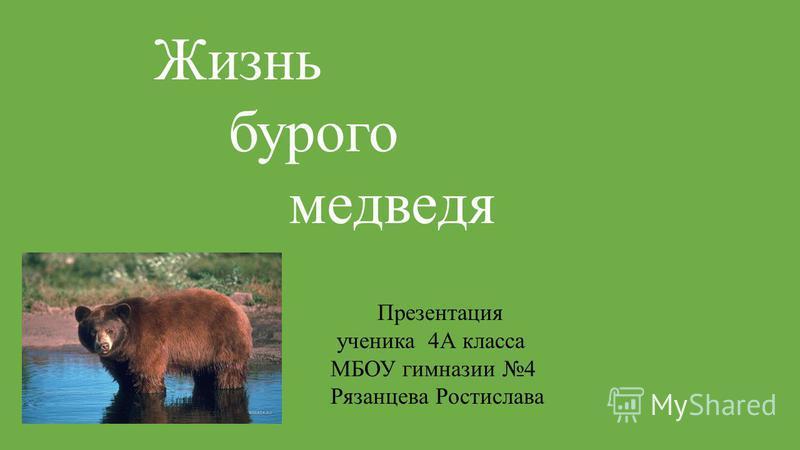 Жизнь бурого медведя Презентация ученика 4А класса МБОУ гимназии 4 Рязанцева Ростислава