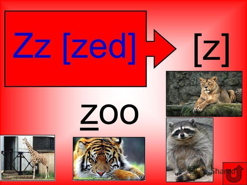 Zz [zed] [z] zoo