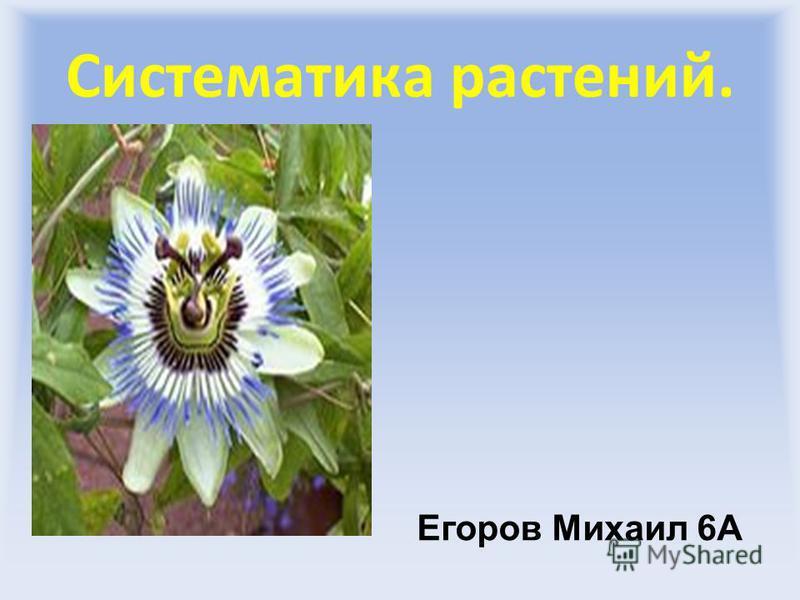 Систематика растений. Егоров Михаил 6А