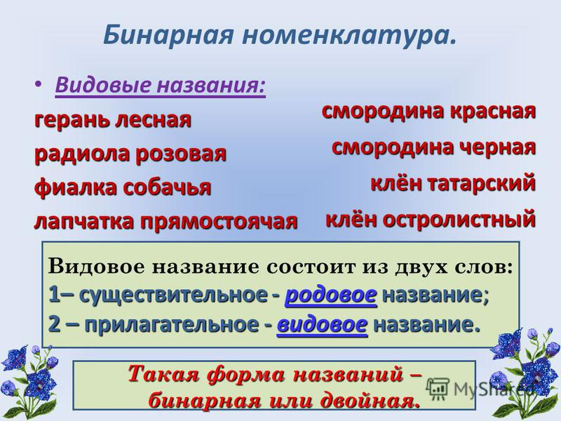 Бинарная номенклатура. Видовые названия: герань лесная радиола розовая фиалка собачья лапчатка прямостоячая смородина красная смородина черная клён татарский клён остролистный Видовое название состоит из двух слов: 1– существительное - родовое назван