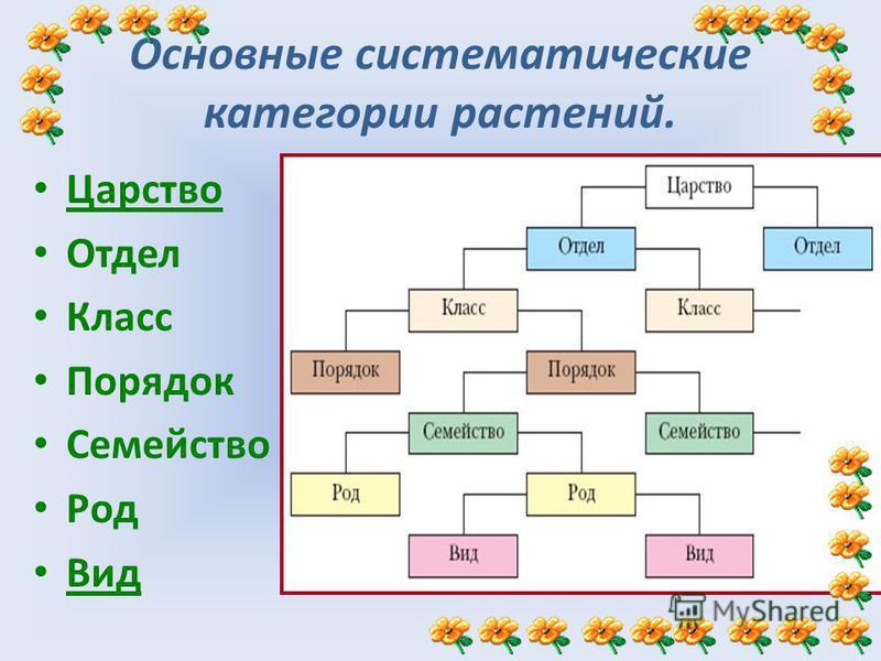 Основные систематические категории растений. Царство Отдел Класс Порядок Семейство Род Вид