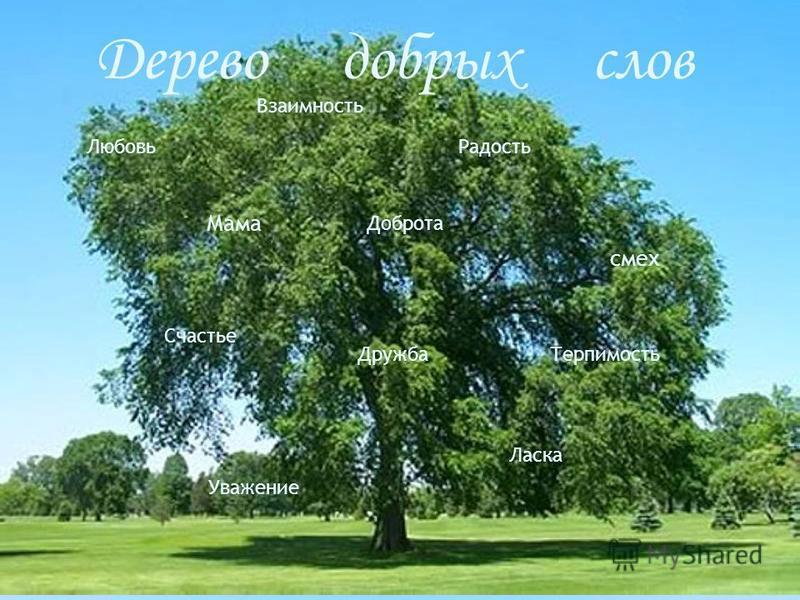 Дерево добрых слов Любовь Мама Радость смех Дружба Взаимность Доброта Счастье Ласка Уважение Терпимость
