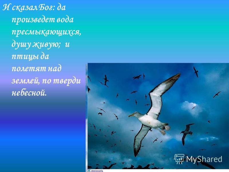 И сказал Бог: да произведет вода пресмыкающихся, душу живую; и птицы да полетят над землей, по тверди небесной.