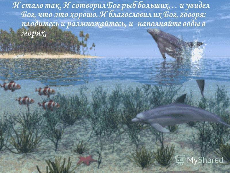 И стало так. И сотворил Бог рыб больших… и увидел Бог, что это хорошо. И благословил их Бог, говоря: плодитесь и размножайтесь, и наполняйте воды в морях,