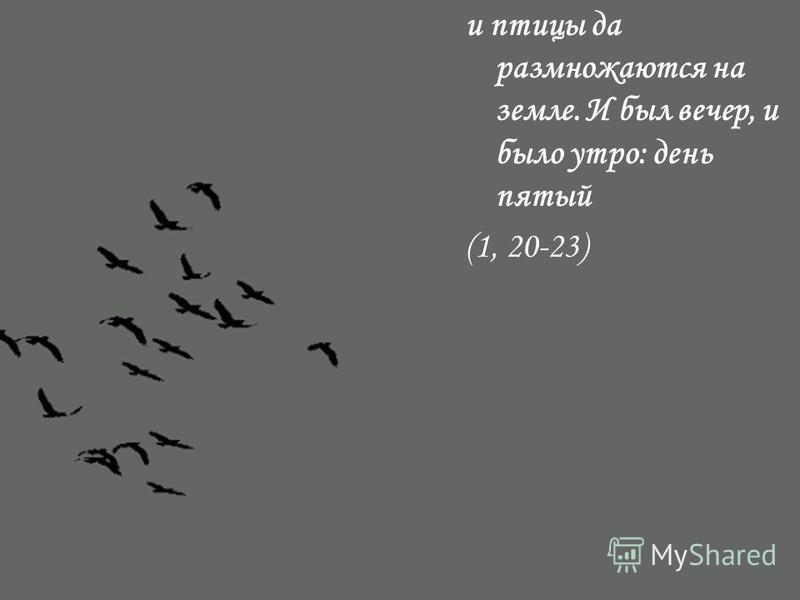 и птицы да размножаются на земле. И был вечер, и было утро: день пятый (1, 20-23)