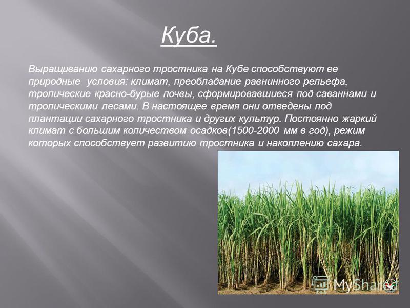 Куба. Выращиванию сахарного тростника на Кубе способствуют ее природные условия: климат, преобладание равнинного рельефа, тропические красно-бурые почвы, сформировавшиеся под саваннами и тропическими лесами. В настоящее время они отведены под плантац