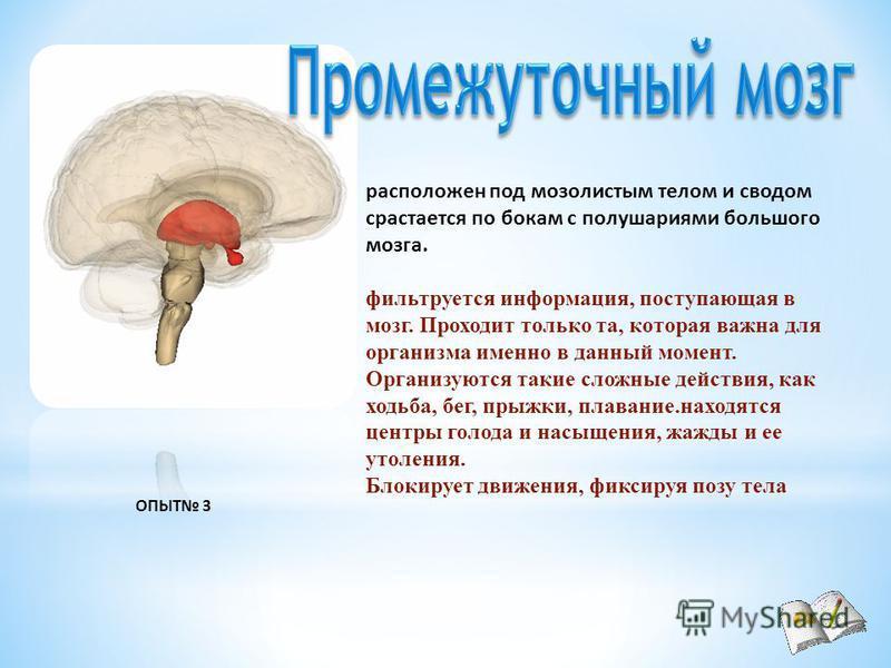 расположен под мозолистым телом и сводом срастается по бокам с полушариями большого мозга. фильтруется информация, поступающая в мозг. Проходит только та, которая важна для организма именно в данный момент. Организуются такие сложные действия, как хо