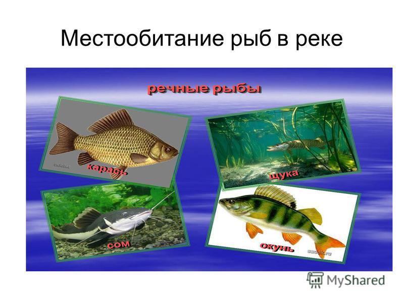 Местообитание рыб в реке