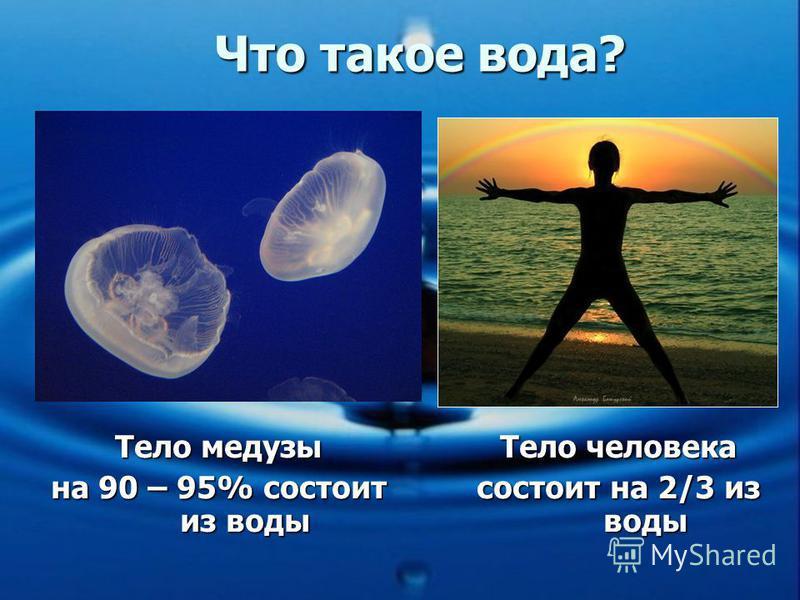 Тело медузы на 90 – 95% состоит из воды Тело человека состоит на 2/3 из воды