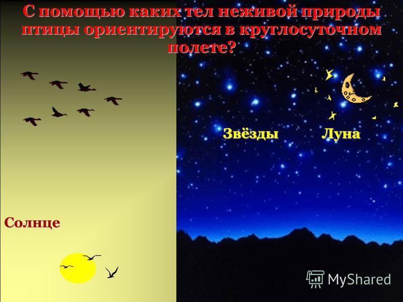 С помощью каких тел неживой природы птицы ориентируются в круглосуточном полете? Луна Звёзды Солнце