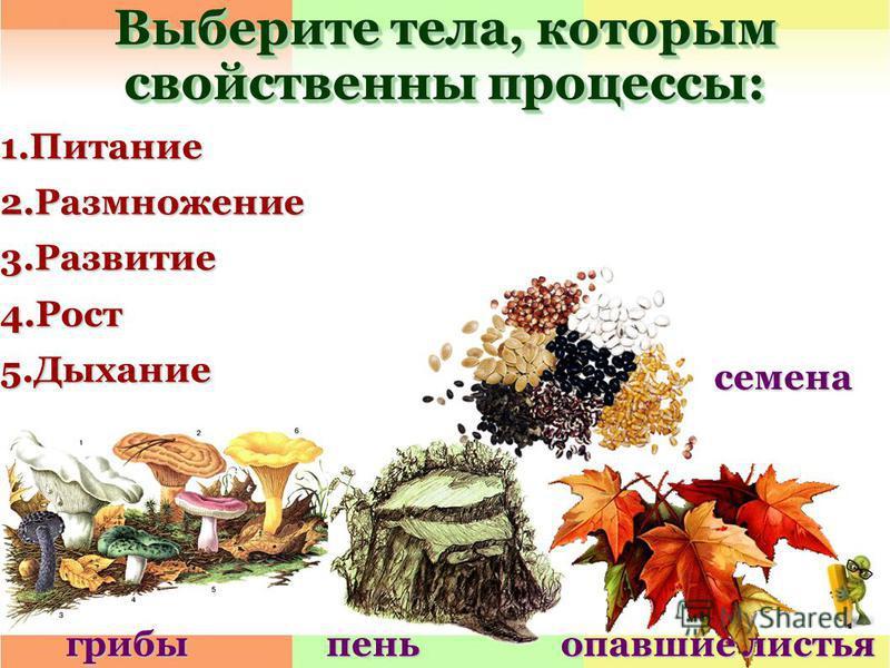 Выберите тела, которым свойственны процессы: 1.Питание 2.Размножение 3.Развитие 4.Рост 5. Дыхание грибы пень опавшие листья семена
