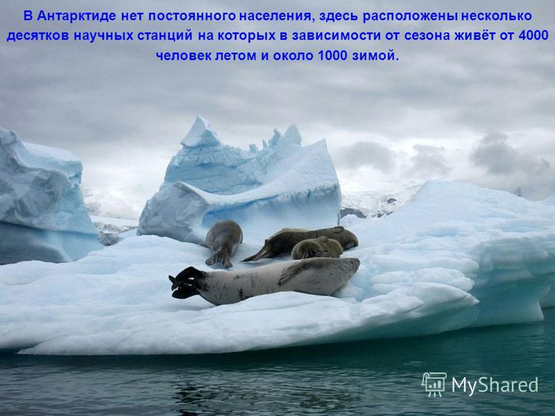 Коренные обитатели Антарктиды – пингвины и тюлени.