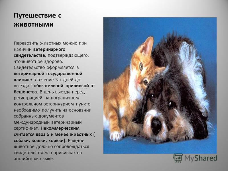 Путешествие с животными Перевозить животных можно при наличии ветеринарного свидетельства, подтверждающего, что животное здорово. Свидетельство оформляется в ветеринарной государственной клинике в течение 3-х дней до выезда с обязательной прививкой о