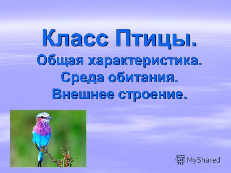 Класс Птицы. Общая характеристика. Среда обитания. Внешнее строение.