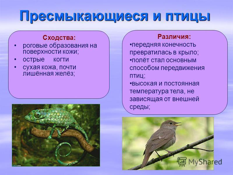 Различия: передняя конечность превратилась в крыло; полёт стал основным способом передвижения птиц; высокая и постоянная температура тела, не зависящая от внешней среды; Сходства: роговые образования на поверхности кожи; острые когти сухая кожа, почт