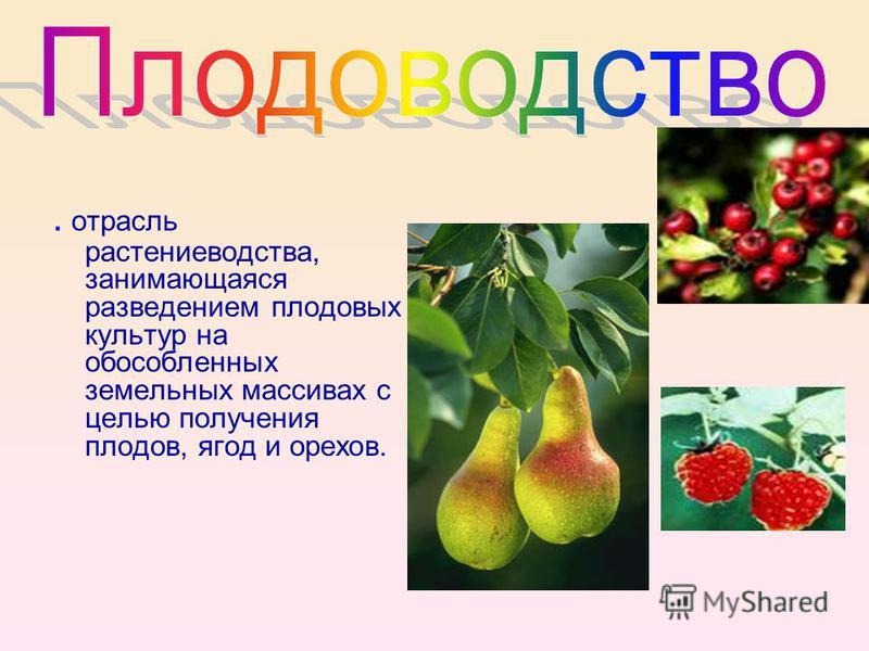 . отрасль растениеводства, занимающаяся разведением плодовых культур на обособленных земельных массивах с целью получения плодов, ягод и орехов.