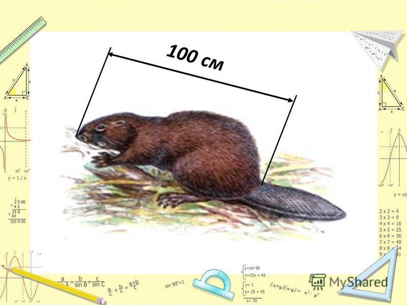 100 см