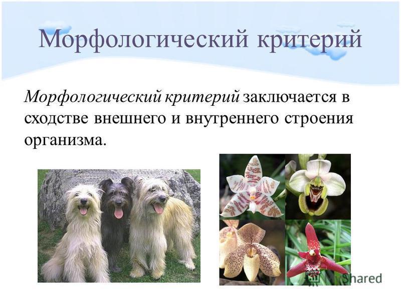 Морфологический критерий Морфологический критерий заключается в сходстве внешнего и внутреннего строения организма.