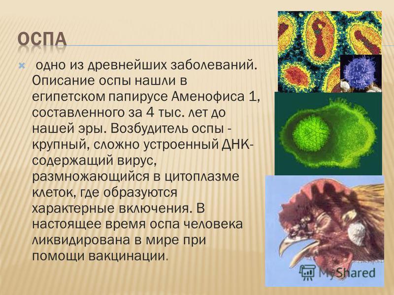 одно из древнейших заболеваний. Описание оспы нашли в египетском папирусе Аменофиса 1, составленного за 4 тыс. лет до нашей эры. Возбудитель оспы - крупный, сложно устроенный ДНК- содержащий вирус, размножающийся в цитоплазме клеток, где образуются х