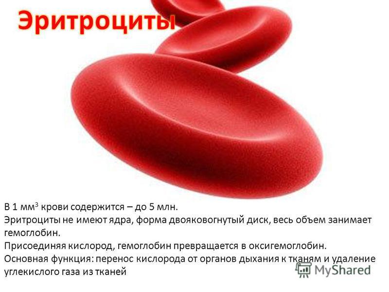 В 1 мм 3 крови содержится – до 5 млн. Эритроциты не имеют ядра, форма двояковогнутый диск, весь объем занимает гемоглобин. Присоединяя кислород, гемоглобин превращается в оксигемоглобин. Основная функция: перенос кислорода от органов дыхания к тканям