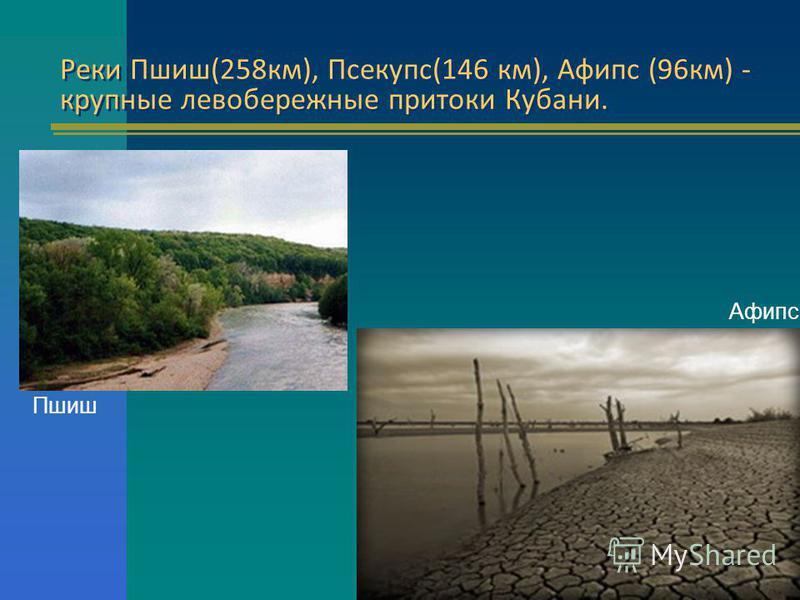 Реки Пшиш(258 км), Псекупс(146 км), Афипс (96 км) - крупные левобережные притоки Кубани. Реки Пшиш(258 км), Псекупс(146 км), Афипс (96 км) - крупные левобережные притоки Кубани. Пшиш Афипс