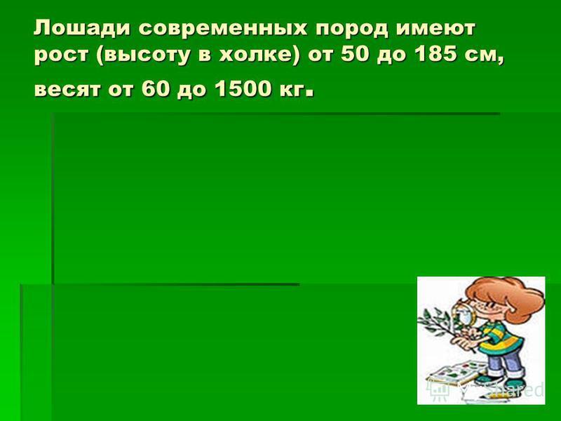 Лошади современных пород имеют рост (высоту в холке) от 50 до 185 см, весят от 60 до 1500 кг.