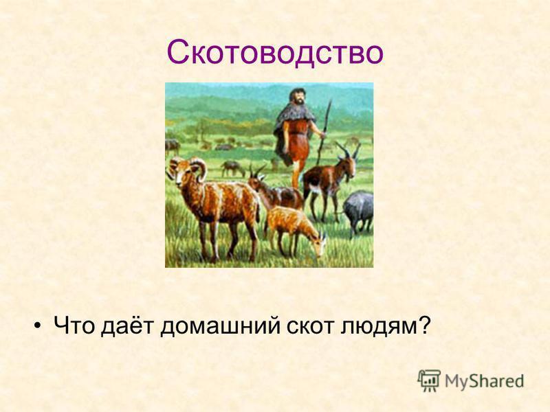 Скотоводство Что даёт домашний скот людям?