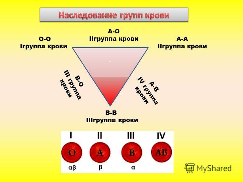При кодоминировании (гетерозиготный организм содержит два разных доминантных аллеля, например А1 и А2 или J A и J B ), каждый из доминантных аллелей проявляет свое действие, т.е. участвует в проявлении признака. Расщепление по фенотипу в F 2 1:2:1 Вз