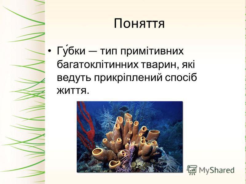 Поняття Гу́бки тип примітивних багатоклітинних тварин, які ведуть прикріплений спосіб життя.