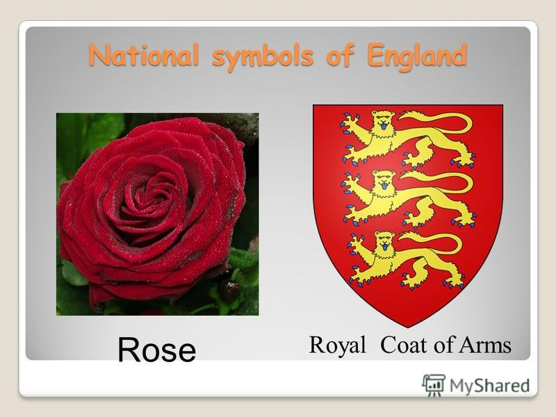 National symbols of England Royal Coat of Arms Rose