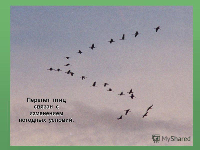 Перелет птиц связан с изменением погодных условий.