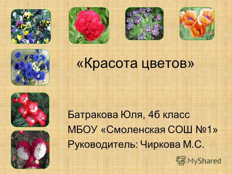 «Красота цветов» Батракова Юля, 4 б класс МБОУ «Смоленская СОШ 1» Руководитель: Чиркова М.С.