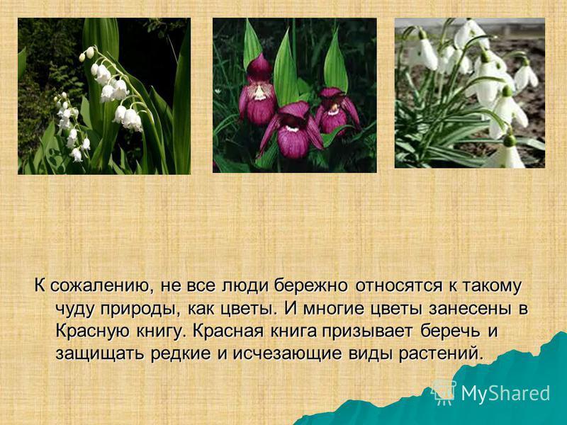 К сожалению, не все люди бережно относятся к такому чуду природы, как цветы. И многие цветы занесены в Красную книгу. Красная книга призывает беречь и защищать редкие и исчезающие виды растений.