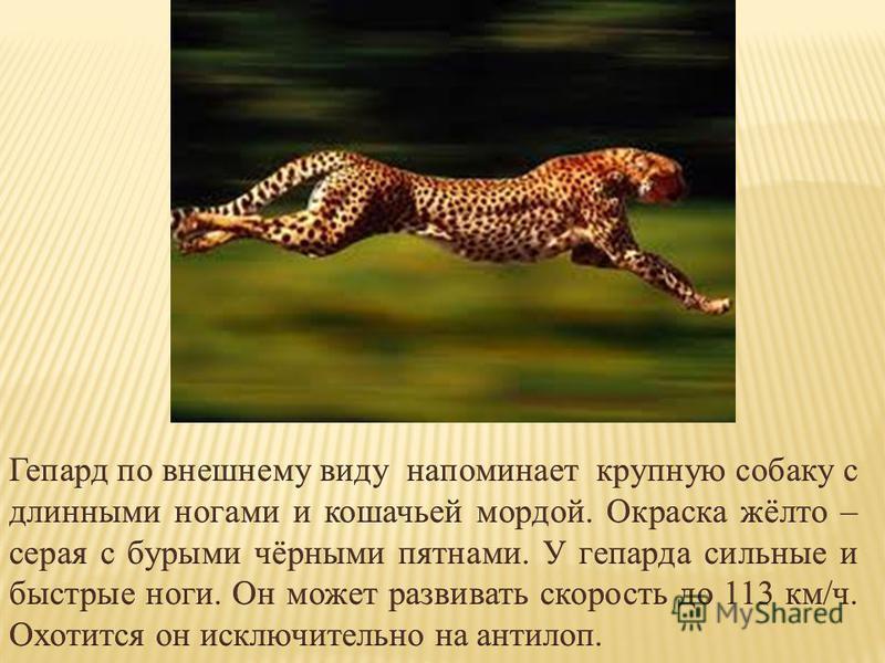 Какое сухопутное животное самое быстрое?