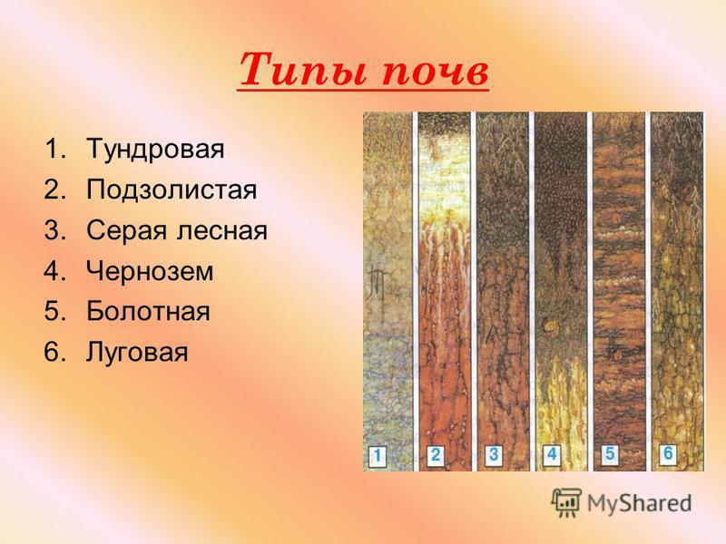 Типы почв 1. Тундровая 2. Подзолистая 3. Серая лесная 4. Чернозем 5. Болотная 6.Луговая
