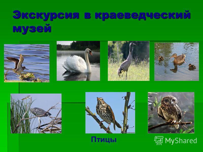 Экскурсия в краеведческий музей Птицы
