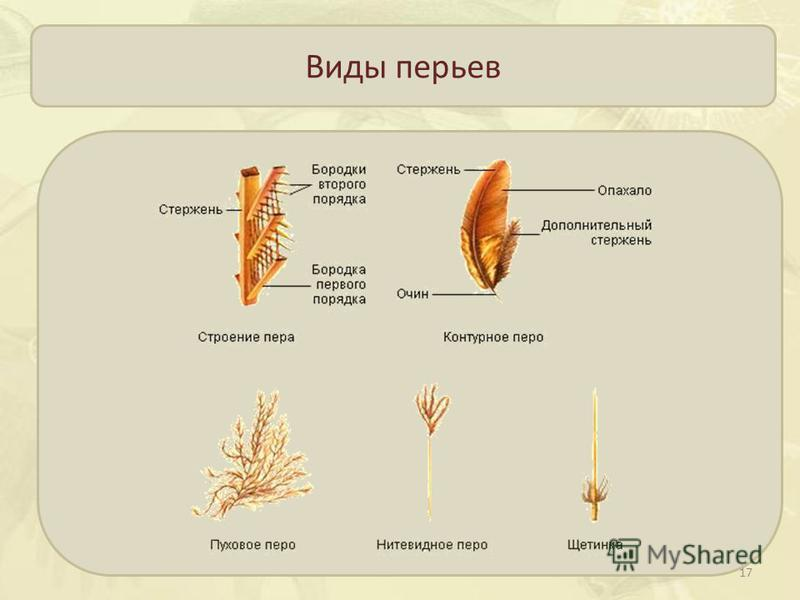 Виды перьев 17