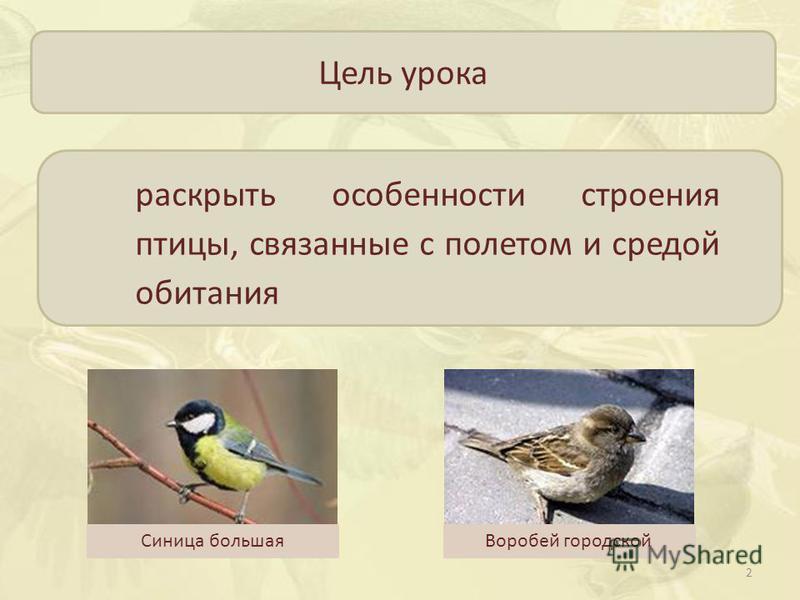 Цель урока раскрыть особенности строения птицы, связанные с полетом и средой обитания Синица большая Воробей городской 2