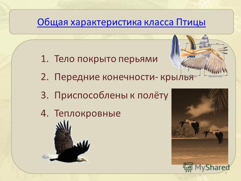 Общая характеристика класса Птицы 1. Тело покрыто перьями 2. Передние конечности- крылья 3. Приспособлены к полёту 4. Теплокровные 3