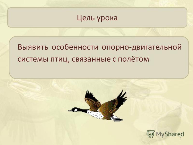 Цель урока Выявить особенности опорно-двигательной системы птиц, связанные с полётом 2