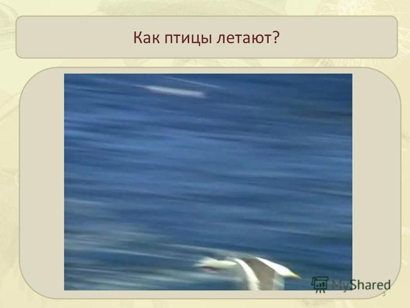 Как птицы летают? 3