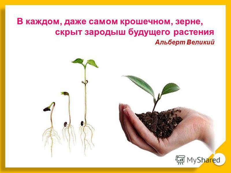 В каждом, даже самом крошечном, зерне, скрыт зародыш будущего растения Альберт Великий