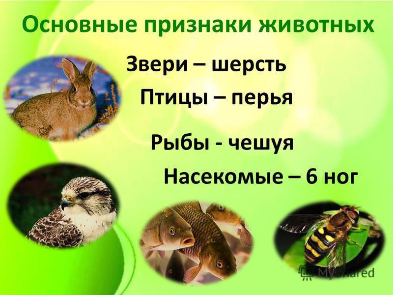Основные признаки животных Звери – шерсть Рыбы - чешуя Птицы – перья Насекомые – 6 ног
