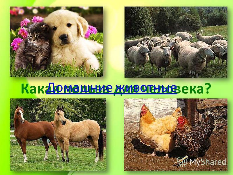 Какая польза для человека? Домашние животные
