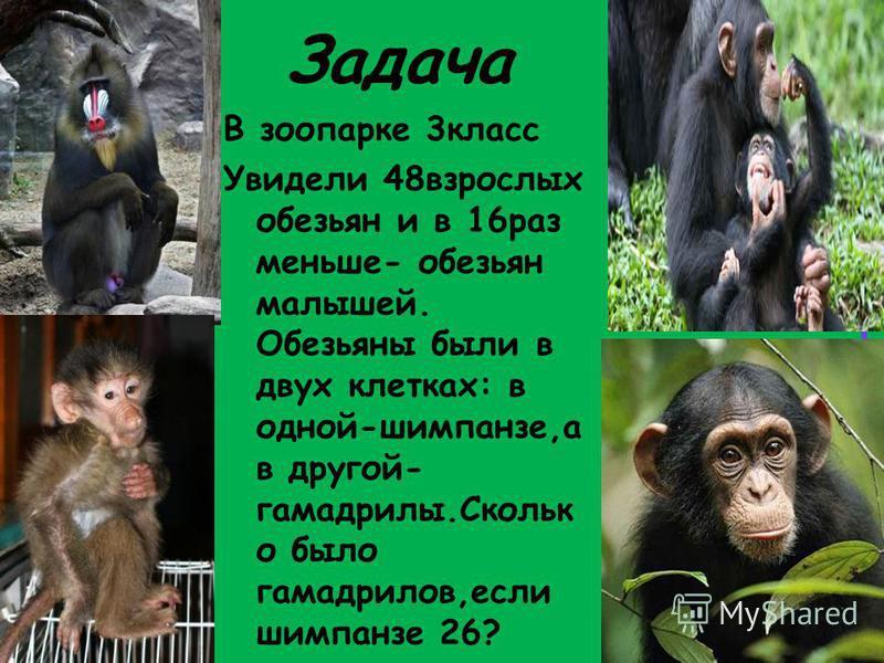 Задача В зоопарке 3 класс Увидели 48 взрослых обезьян и в 16 раз меньше- обезьян малышей. Обезьяны были в двух клетках: в одной-шимпанзе,а в другой- гамадрилы.Скольк о было гамадрилов,если шимпанзе 26?