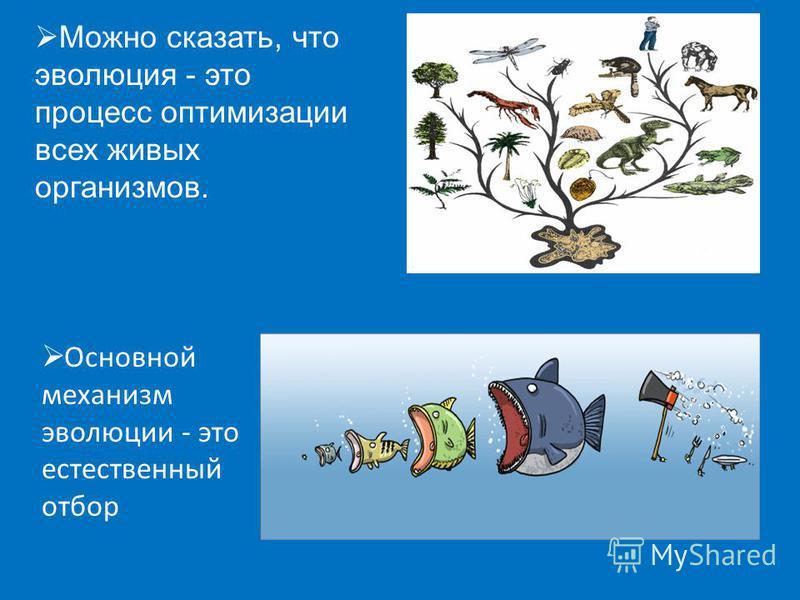 Можно сказать, что эволюция - это процесс оптимизации всех живых организмов. Основной механизм эволюции - это естественный отбор